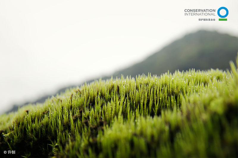 小草与春天